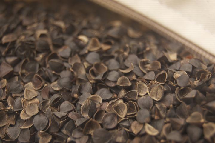 Buckwheat hulls inside a buckwheat pillow