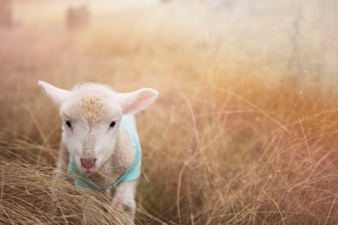 Does humane wool exist?